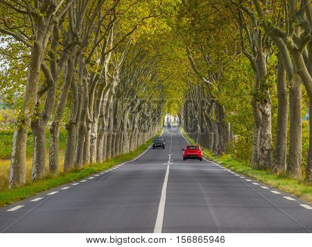 Tree lined country road in southern France