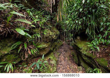 Deep jungle in the Bako national park, Malaysia, Borneo