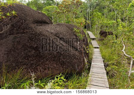 Deep jungle in the Bako national park, Malaysia, Borneo