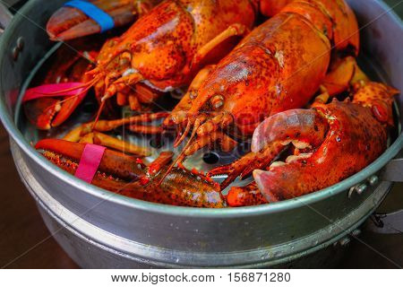 Maine Lobster in the iron steamer on a dark wooden table