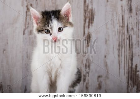 Portrait Of Few Weeks Old White-tabby Kitten On White Wooden Background
