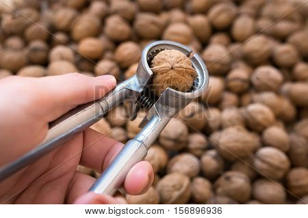 tool for cracking nuts in a man's hand on a background of walnuts
