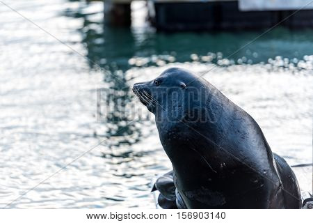a sea lion on the Pier 39 in San Francisco