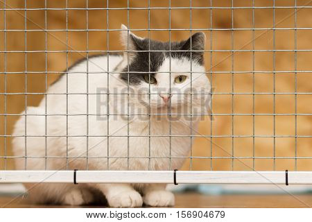 White adult cat with black ears sitting behind a metal grille.