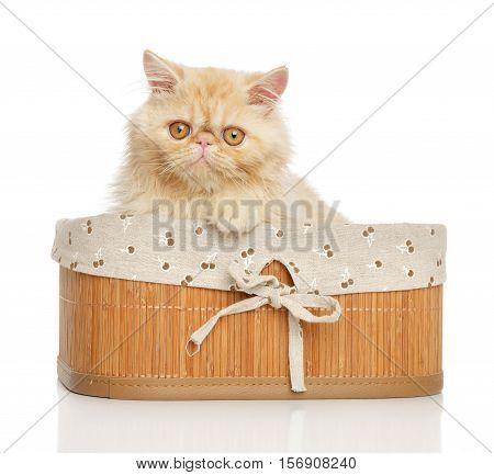 Persian Cat In Basket