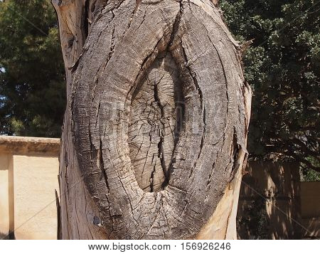 Fancy education on a tree trunk in the form of the closed hollow