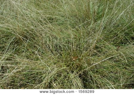Close-Up Desert Grass