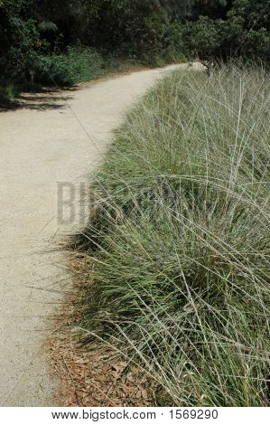 Pathway With Grass