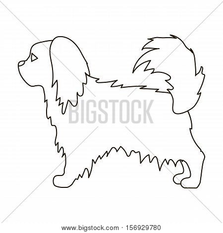 Pekingese icon in outline style isolated on white background. Dog breeds symbol vector illustration.