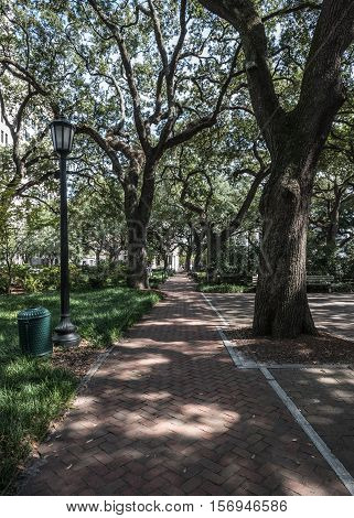 Live Oak Trees and Brick Path in Savannah's City Park System