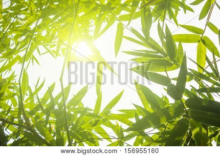 Green bamboo leaves or with background .Green Energy.isolated spring summer chistmas holiday.