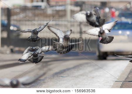 flock of pigeons in flight over the street
