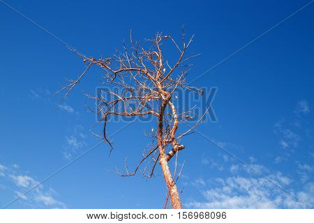 Branches of dead tree with blue sky background