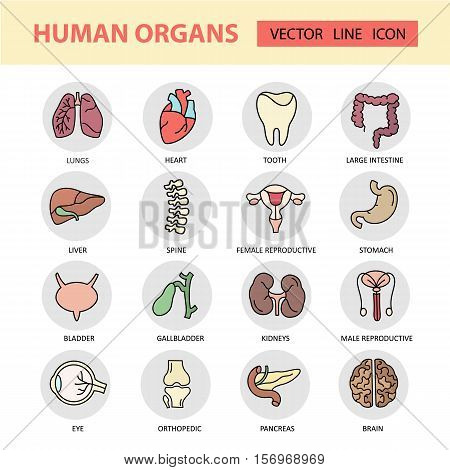 Modern color thin line icons on a theme medicine human internal organs. High quality vector logos. Label for medical organization. Flat style icons for your collection.