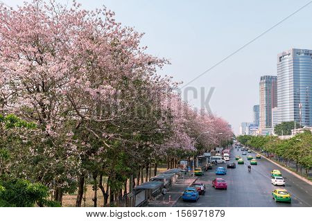 BANGKOK - Apr 17 2016 Thailand: Front Street Park. A beautiful pink flowering tree in the garden. Chatuchak Park in Bangkok
