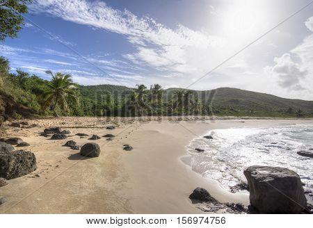 Wide angle direct into sun Playa Brava tropical Caribbean beach on Isla Culebra island with sandy beach and coconut palms