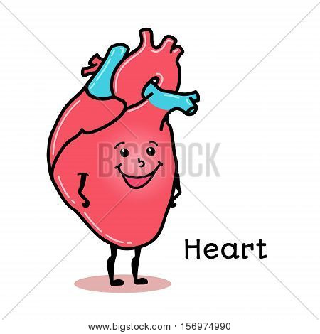 Cute and funny human heart character, cartoon vector illustration isolated on white background. Healthy smiling heart character with arms and legs