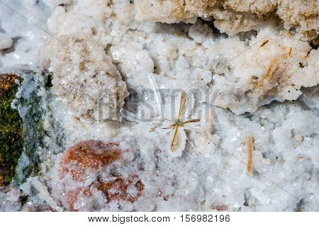 Mosquito Fossil In Salt Crystal