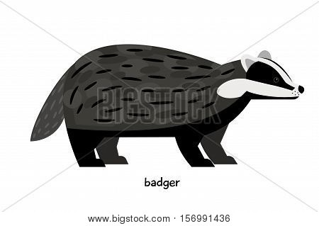 Cute black badger with striped muzzle and short tail