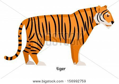 Serious striped tiger with long tail waiting for prey