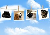 Photos of dogs and cats hanging from a clothes line poster