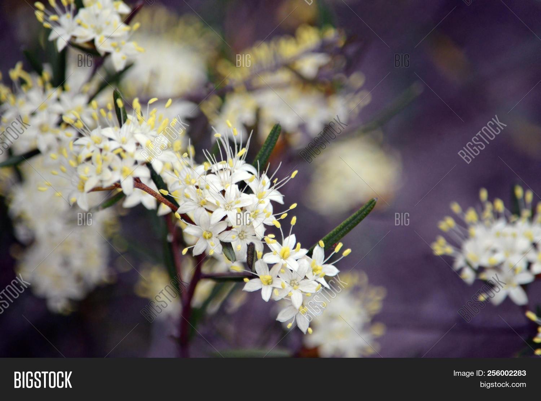 White Yellow Flowers Image Photo Free Trial Bigstock