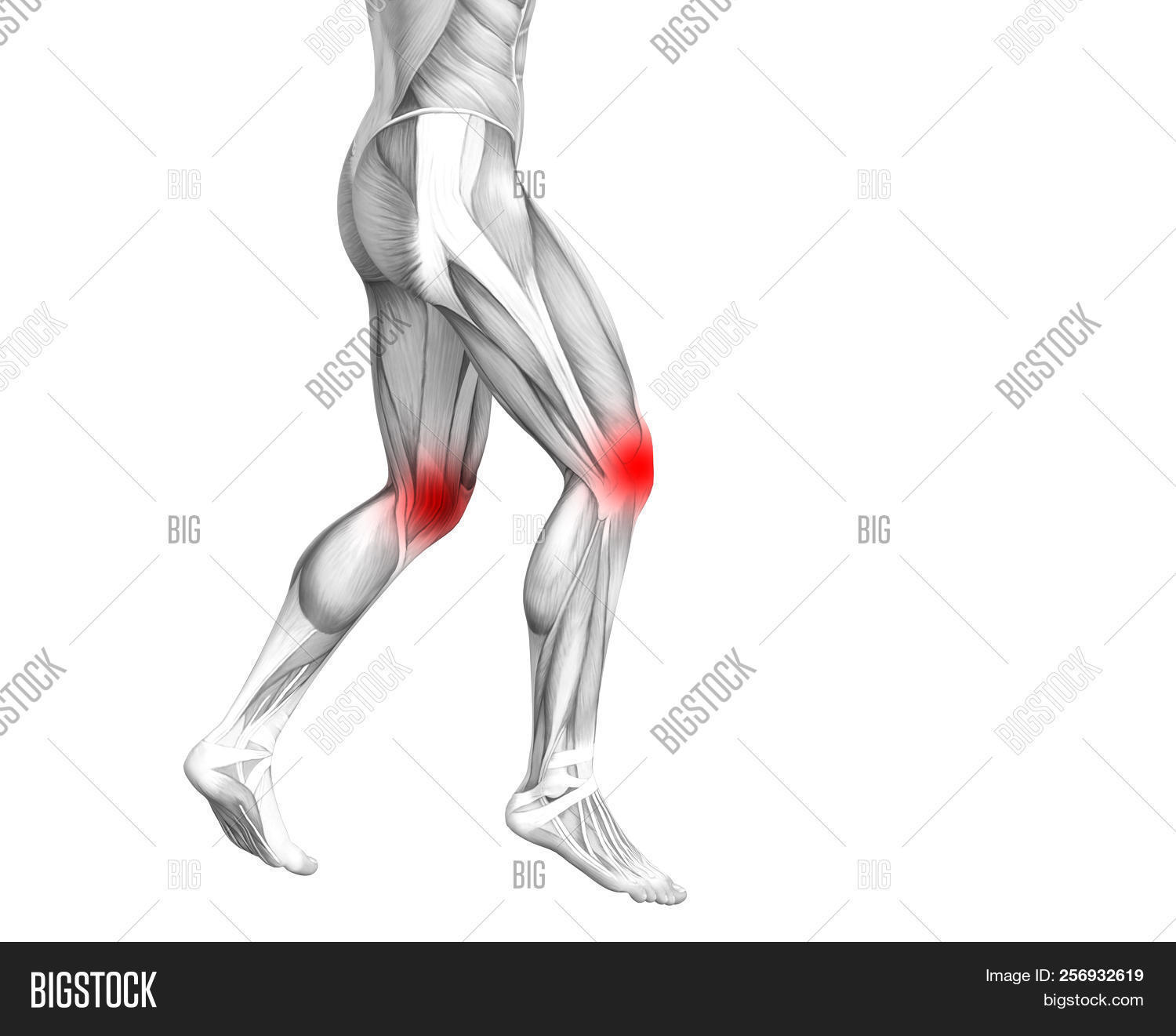 9301db6a2f3 Conceptual knee human anatomy with red hot spot inflammation or articular  joint pain for leg health