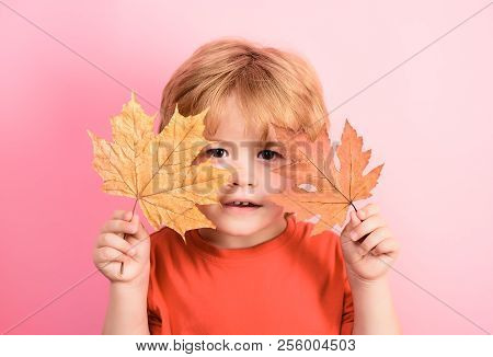 Autumn Season. Little Boy With Maple Leaves. Happy Child Playing With Fallen Leaves. Toddler Cute Bo