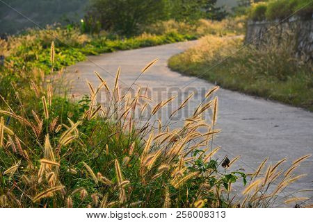 Rural Road With Grass In Sunset
