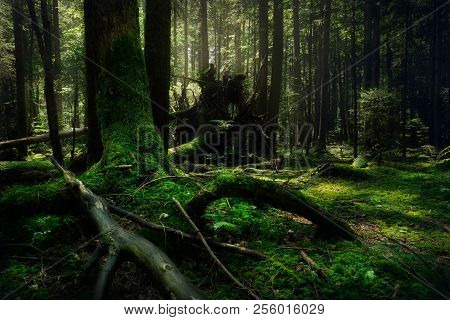 Dark forest .Forest nature landscape.Dark forest nature ladnscape. Forest. Fairy tale forest landscape in nature. Nature. Landscape. Forest background.