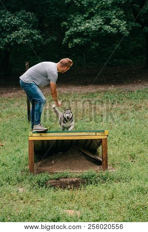 cynologist training with obedient husky on dog walk obstacle poster