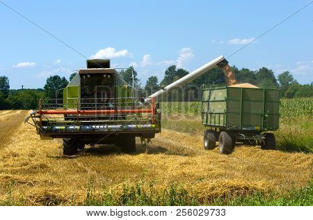 A Combine Is Transporting The Harvested Grain Into A Trailer