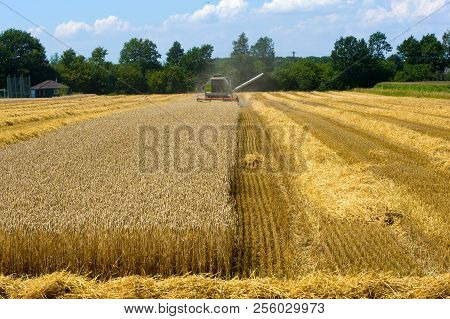 A Combine Machine Is Busy To Harvest Grain In The Summr In Germany