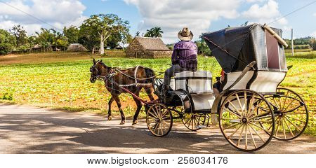 Vinales Valley, Pinar Del Rio, Cuba. January 2018. Local Men On An Old Wooden Horse And Cart In Vina