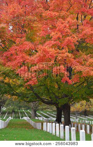Autumn foliage in Arlington National Cemetery near to Washington DC United States of America