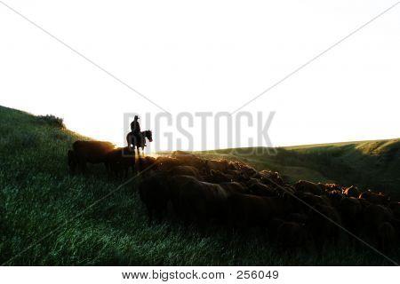 Redondear el ganado