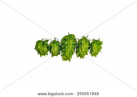 Green Organic Beer Hops On White Background Flat Lay With Copy Space