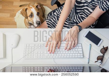 Going To Work With Pets Concept: Woman Working At Desktop Computer With Dog Next To Her. Top View Of