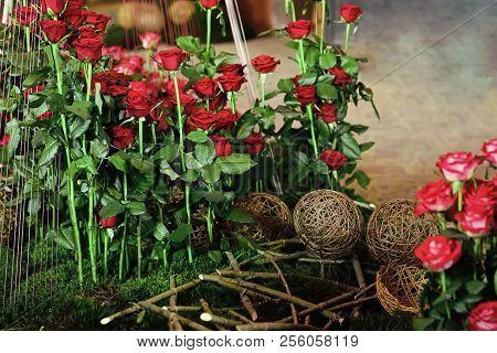 Spring, Summer Blossom, Flowering Plants. Roses In Flowerbed, Floristry. Rose Flowers With Red Petal