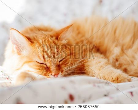 Cute ginger cat lying in bed. Fluffy pet dozing. Cozy home background, morning bedtime. poster