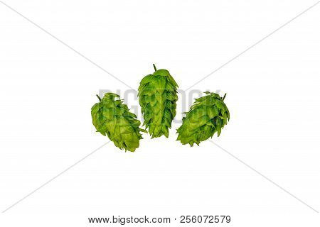 Organic Locally Grown Brewing Hops On White Background Flat Lay