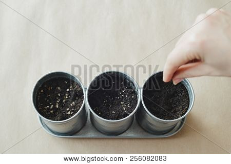 Woman Planting Seeds In Metal Flower Pot, Stock Photo Image
