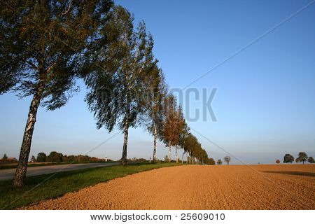 line of trees along side a ploughed field