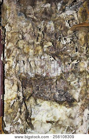 detail of dry rot mycelium (Serpula lacrymans ) poster