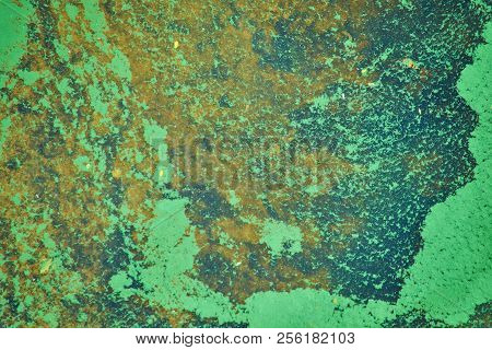 green algae on the surface of the water. flowering water as background or texture poster