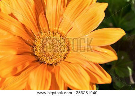 Beautiful Orange Flower In Spring For Backgrounds.