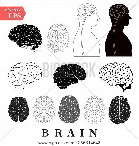 Human Brain Anatomy Collection Set Anterior Inferior Lateral And Sagittal Views Spinal Cord Start Lo