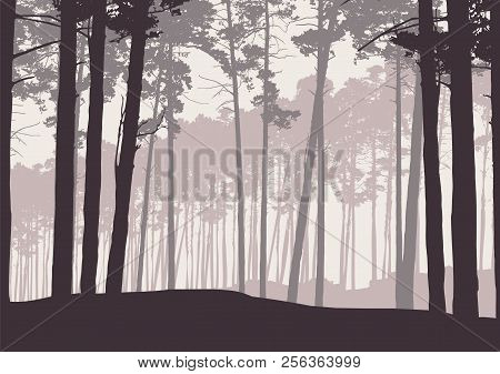 Vector Illustration Of A Winter Coniferous Forest With Pine Trees In Retro Color, Under A Gray Sky W