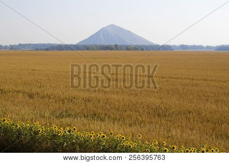 Oats Grow On The Field And Behind It A Beautiful Mountain
