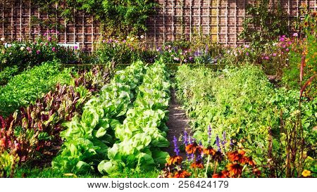 Vegetable Garden In Late Summer. Herbs, Flowers And Vegetables In Backyard Formal Garden. Eco Friend